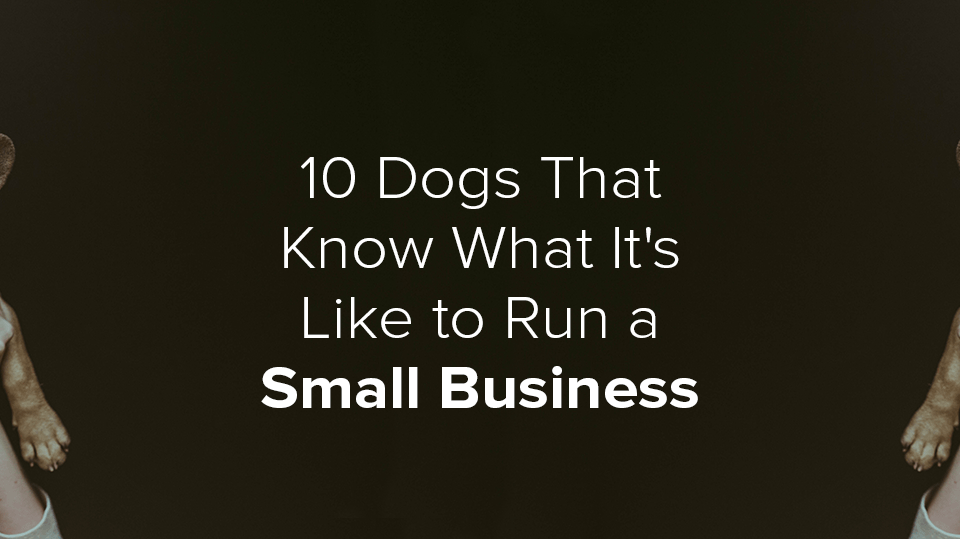 Dogs Run a Small Business