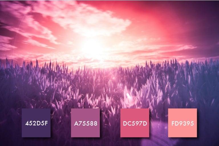 Paleta de color rosa